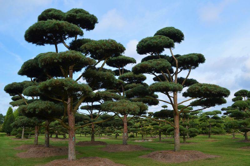 Sourcing de plantes de jardin, Plantideal simplicité et agilité